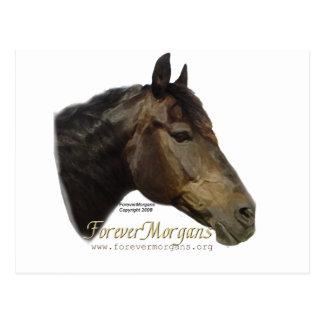 Rescued ForeverMorgan  Horse Apollo Postcard