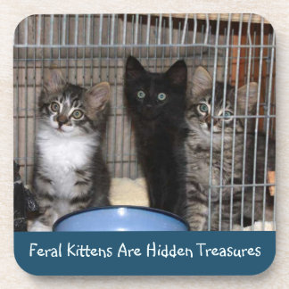 Rescued Kitten Treasures Coasters