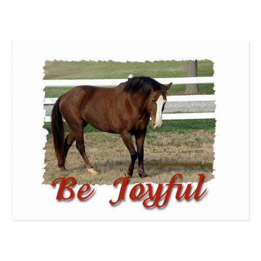 Rescued Morgan Horse:  Be Joyful Postcard