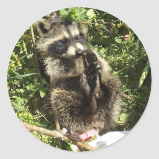 Rescued & Rehabilitated Raccoon Baby Round Stickers