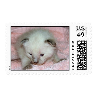 Rescuties Siamese Kitten Stamps