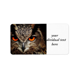 researchers looking owl label