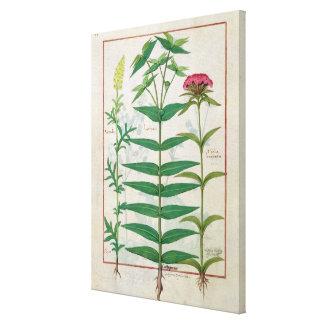 Reseda, Euphorbia and Dianthus Canvas Print