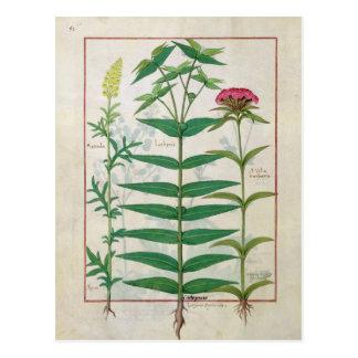Reseda, Euphorbia and Dianthus Postcard