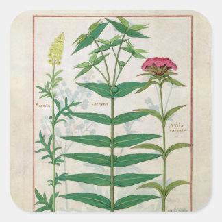 Reseda, Euphorbia and Dianthus Square Sticker