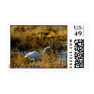Reserva amarga de los lagos Egret. Envio