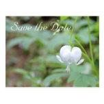Reserva blanca de la flor del corazón sangrante la tarjetas postales