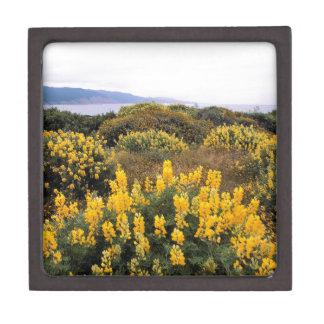 Reserva California del estado del Lupine de la man Cajas De Joyas De Calidad