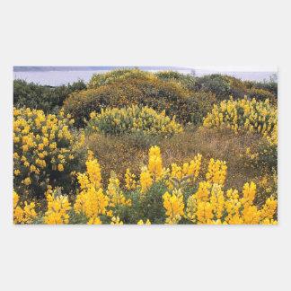 Reserva California del estado del Lupine de la Rectangular Altavoces