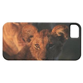 Reserva de la fauna de Moremi Botswana 2 iPhone 5 Case-Mate Protector