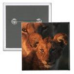 Reserva de la fauna de Moremi, Botswana 2 Pin