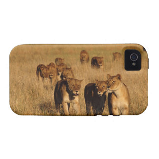 Reserva de la fauna de Moremi Botswana