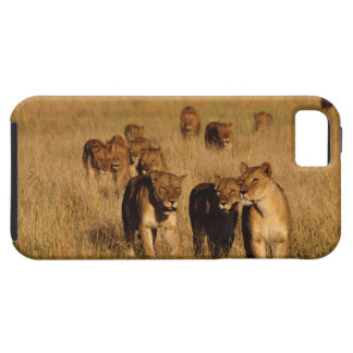 Reserva de la fauna de Moremi Botswana iPhone 5 Case-Mate Fundas