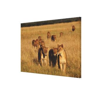 Reserva de la fauna de Moremi, Botswana Impresion De Lienzo
