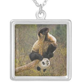 Reserva de la panda de Wolong, China, 2 1/2 año Collar Plateado