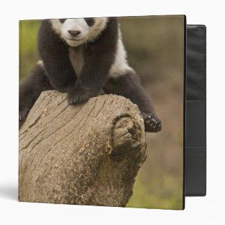 """Reserva de la panda de Wolong, China, panda del be Carpeta 1 1/2"""""""