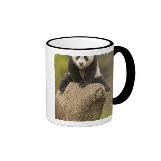 Reserva de la panda de Wolong China panda del be Tazas De Café