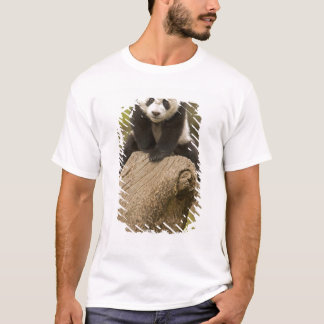 Reserva de la panda de Wolong, China, panda del Playera