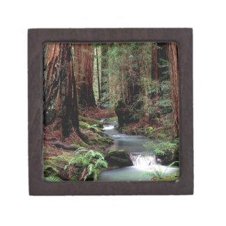 Reserva de maderas de Montgomery del bosque Cajas De Joyas De Calidad
