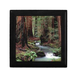Reserva de maderas de Montgomery del bosque Cajas De Regalo