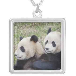 Reserva de Wolong, China, abrazo de la panda Collar Plateado