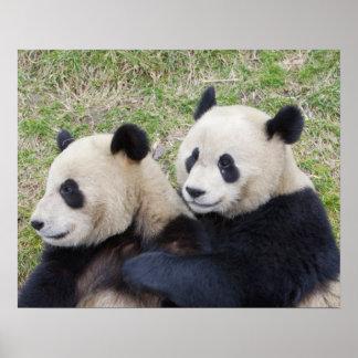 Reserva de Wolong, China, abrazo de la panda gigan Impresiones