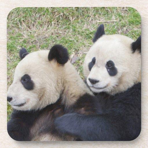 Reserva de Wolong, China, abrazo de la panda gigan Posavasos