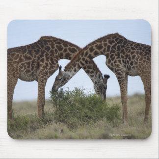 Reserva del juego de África, Kenia, Mara del Alfombrillas De Ratones