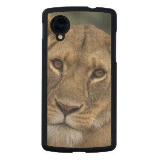 Reserva del juego de África, Kenia, Mara del Funda De Nexus 5 Carved® De Arce