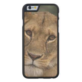 Reserva del juego de África, Kenia, Mara del Funda De iPhone 6 Carved® De Arce