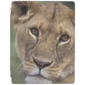Reserva del juego de África, Kenia, Mara del Cover De iPad