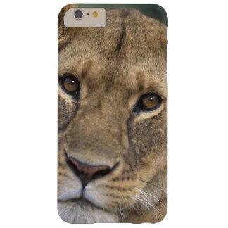 Reserva del juego de África, Kenia, Mara del Funda De iPhone 6 Plus Barely There