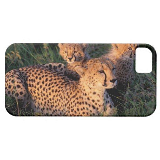 Reserva del juego de África, Kenia, Mara del iPhone 5 Carcasa
