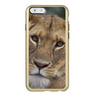 Reserva del juego de África, Kenia, Mara del Funda Para iPhone 6 Plus Incipio Feather Shine