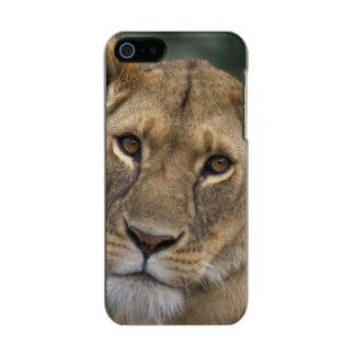 Reserva del juego de África, Kenia, Mara del Carcasa De Iphone 5 Incipio Feather Shine