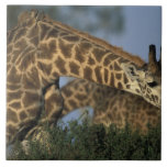 Reserva del juego de África, Kenia, Mara del Masai Teja