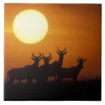 Reserva del juego de África, Kenia, Mara del Masai Azulejo Cuadrado Grande