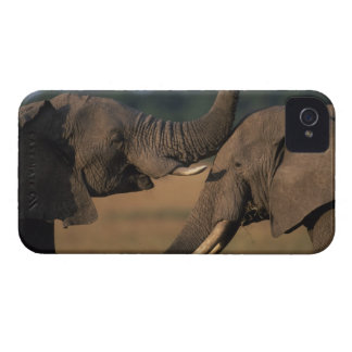 Reserva del juego de África, Kenia, Mara del Masai Case-Mate iPhone 4 Cárcasa