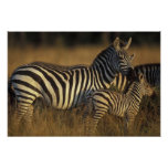 Reserva del juego de África, Kenia, Mara del Masai Posters