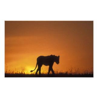 Reserva del juego de África, Kenia, Mara del Masai Impresión Fotográfica