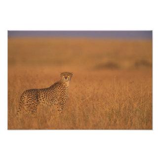 Reserva del juego de África, Kenia, Mara del Masai Fotografías