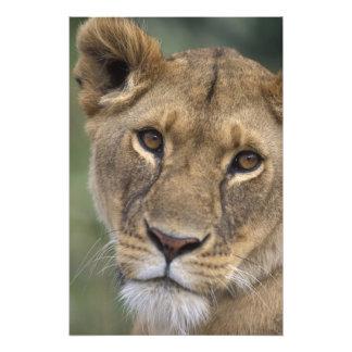 Reserva del juego de África, Kenia, Mara del Masai Impresiones Fotográficas