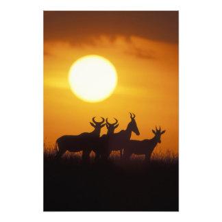 Reserva del juego de África, Kenia, Mara del Masai Fotografia