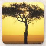 Reserva del juego de África, Kenia, Mara del Masai Posavaso