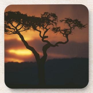 Reserva del juego de África, Kenia, Mara del Masai Posavasos De Bebidas