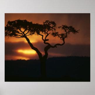 Reserva del juego de África, Kenia, Mara del Masai Póster