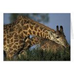 Reserva del juego de África, Kenia, Mara del Masai Felicitacion