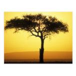 Reserva del juego de África, Kenia, Mara del Masai Tarjeta Postal