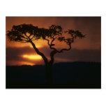 Reserva del juego de África, Kenia, Mara del Masai Postal