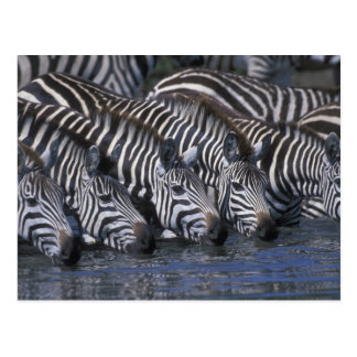 Reserva del juego de África Kenia Mara del Masai Postales